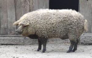 Pues no: no es una oveja...