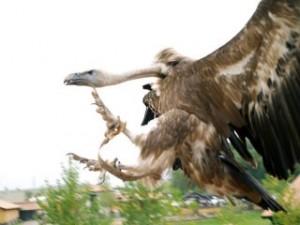 En la Facultad de Económicas dicen que esto es un halcón...