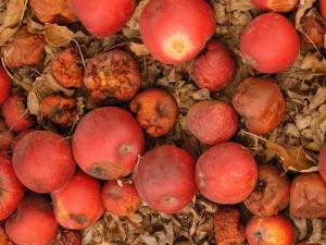 Manzanas podridas de corrupción
