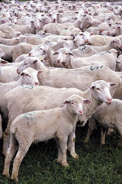 El monte para las cabras